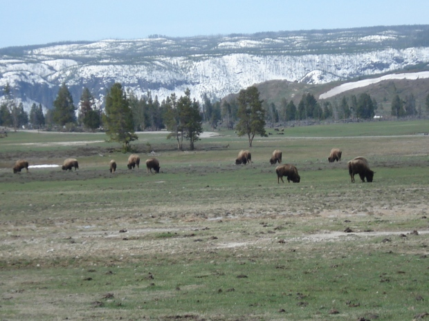 De carro pelo Velho Oeste - Parte 1: Yellowstone
