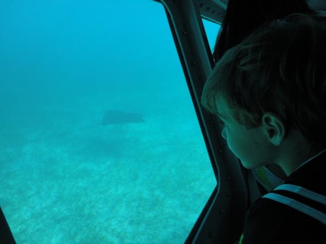 Dudu ficou encantado em ver a arraia livre, no fundo do mar, de pertinho