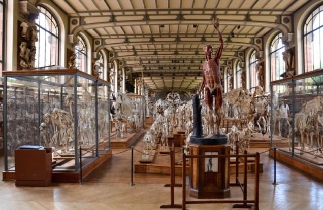 Galerias de Anatomia Comparada e Paleontologia Fonte: site do MNHN