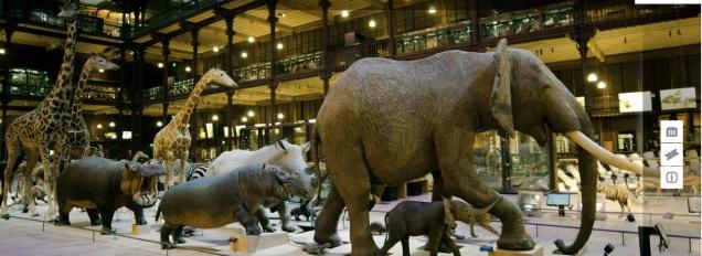 Grande Galeria da Evolução Fonte: site no MNHN